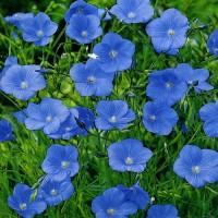 Лен Небесная Лазурь голубой
